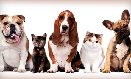 Five Days of Dog Daycare or $40 for $100 Worth of Dog or Cat Boarding at Petropolis Pet Center