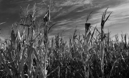 Heaps Haunted Corn Maze Visit with Hayride for Two, Four, or Six (Up to 51% Off)