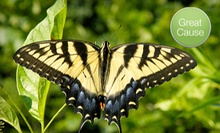 $10 Donation to Help Build a Butterfly Habitat