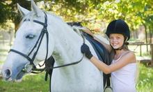 One, Two, or Three 60-Minute Horseback-Riding Lessons at Freedom Run Equestrian Center (Up to 73% Off)