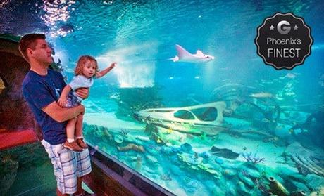 Aquarium Visit And Souvenir Sea Life Arizona Aquarium