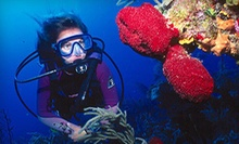 Scuba-Certification Course with Optional Open Dives for One or a Discover Scuba Class for Two at Scuba Shack (Half Off)