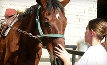 One or Four Group Horse-Riding Lessons at Foxcroft Farm (Up to 54% Off)