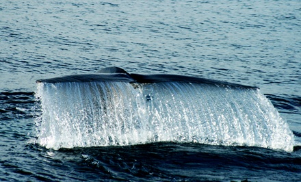 2.5-Hour Whale-Watching Cruise for One, Two, or Four from Shoreliner Cruises (Up to 54% Off)