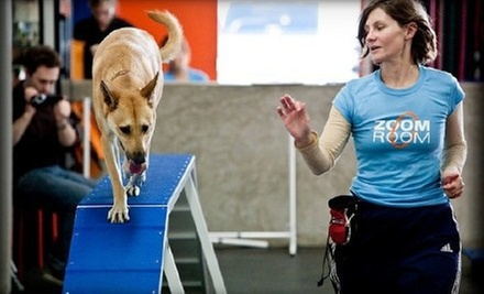 Four Group Dog-Training Classes or Private Dog Gym Sessions with Evaluation at Zoom Room (Up to Half Off)