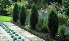 $20 for $40 Worth of Shrubs and Trees at The Garden Spot Nursery &amp; Landscaping 