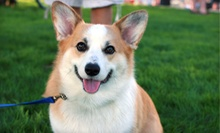 Five or Ten Physical Fitness and Dog Obedience Boot Camps at Thank Dog! Bootcamp (Up to 64% Off)