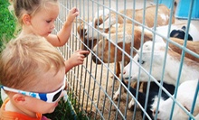 Animal Petting Farm Visit for Two or Four at Green Meadows Petting Farm in Waterford (Up to 52% Off)