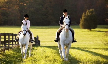 One or Three Horseback-Riding Lessons, or Horsemanship Package at Connemara Ranch Private Lessons (Up to 64% Off)