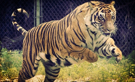 $29 for Visit for Four to Big Cat Habitat (Up to $60 Value)