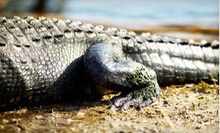 One-Hour Tour for Two or Four, or Birthday Party for Up to 15 at Kliebert's Turtle and Alligator Farm (Up to 51% Off)