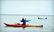 Half-Day or Full-Day Wildlife Kayak Tour of San Juan Islands from Outer Island Expeditions in Eastsound (Up to 51% Off)