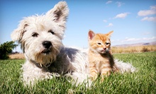 $20 for $40 Worth of Pet Toys and Accessories at All Pets Considered