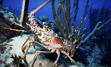 90-Minute Lobster Scuba-Diving Trip for One or Two from Liquid Addiction Dive & Surf (Up to 53% Off)