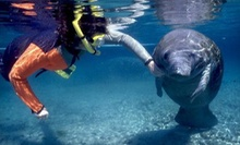 $25 for a Manatee Snorkeling Tour from Native Vacation ($55 Value)