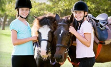Horse Riding Lessons and Boarding at Dunwyn Equestrian Centre (Up to 61% Off). Three Options Available.
