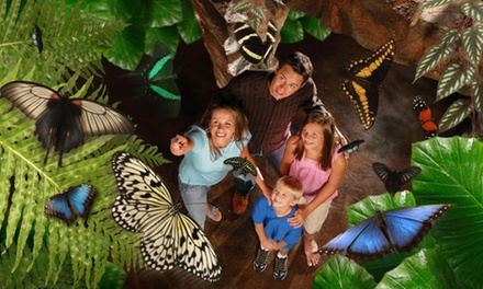 Visit for Two Adults or a Family to The Butterfly Palace & Rainforest Adventure (Up to 38% Off)