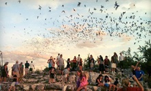 Bat-Flight Tour for Two or Four from Frio Bat Flight (Up to 54% Off)