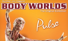 """Body Worlds: Pulse"" Human-Anatomy Exhibit for Child, Senior, or Adult at Discovery Times Square (Up to 51% Off)"