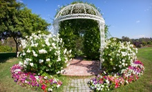 Individual, Family, Senior, or Senior Family Membership for One Year to South Coast Botanic Garden (Half Off)