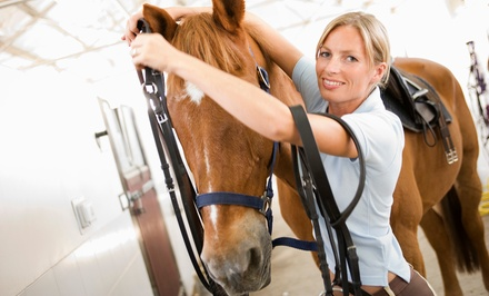 60-Minute Indoor Horseback-Riding Lesson for Two or Four at Green Acres Ranch (Up to 56% Off)