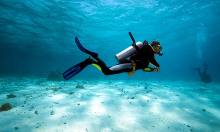 PADI Open-Water Diver Certification or Discover Scuba-Diving Experience from B & W Dive Co. (Up to 68% Off)