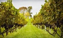 Vineyard Tour, Souvenir Wine Glasses, and Charcuterie for Two or Four at Philip Carter Winery (Up to 62% Off)