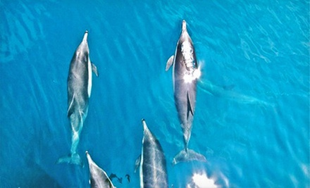 Seafari Tour for One or Two from Channel Islands Whale Watching (Up to 53% Off)