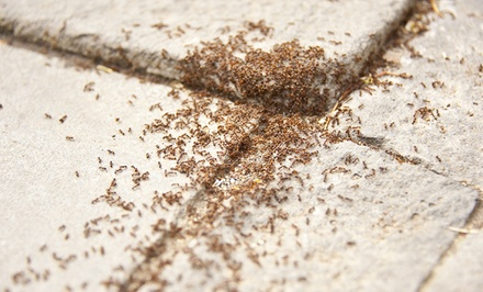 Green Pest-Control Treatments from Certified Termite & Pest Control (Up to 75% Off). Two Options Available.