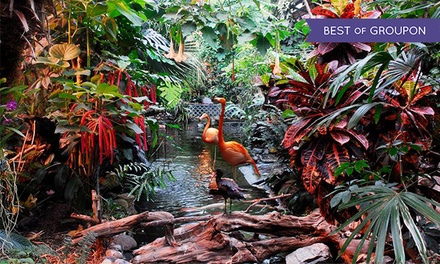Entry for Two People or One Family, or One Adult Annual Gold Pass at The Butterfly Gardens (Up to 51% Off)