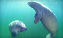 Guided Manatee-Snorkeling Tour for One or Two from Adventure Diving (Up to 55% Off)