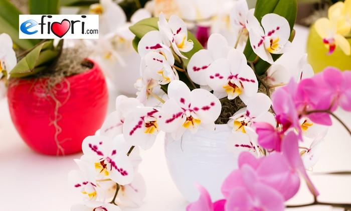 Efiori.com: eFiori.com - Buono sconto di 25 € da spendere sul sito per piante, fiori e composizioni natalizie