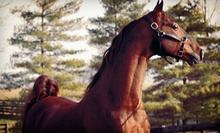 Two or Four One-Hour Private Horseback-Riding Lessons at Diamond View Farm (Half Off)