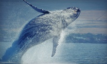 Marine-Life Adventure from Island Water Sports Hawaii (Up to 56% Off). Three Options Available.