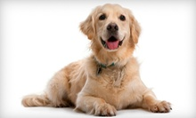 Dog Grooming for a Small, Medium, Large, or Extralarge Dog at The Golden Paw (Up to 51% Off)