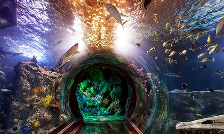 Admission to Dark Waters Event at Sea Life Grapevine Aquarium, October 23–25 (Up to 33% Off)
