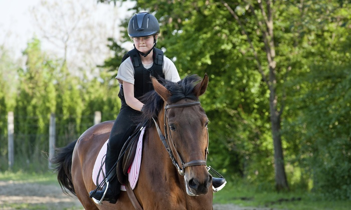 Al-Baraka Equestrian - Cape Town: Horse Riding Lessons From R100 at Al-Baraka Equestrian (Up To 60% Off)