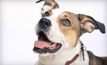Dog Washing, Dog Boarding, or Doggy Daycare at Tail Waggerz Pet Care (Up to 67% Off). Five Options Available.