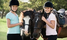 Horseback-Riding Lesson for One, Two, or Four at Allimax Farm (Up to 64% Off)