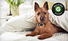 Dog or Cat Grooming at Paw-pular Trends (Up to 57% Off). Five Options Available.