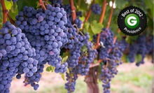 Vineyard Tour with Tasting for Two or Four at Newport Vineyards (Half Off)