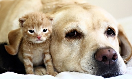 $20 for Vet Visit with Pet Exam and Heartworm Test at Shallowford Animal Hospital ($89 Value)