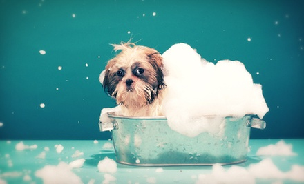 Two Baths for an Extralarge, Large, Medium, or Small Dog at Northeast Pet Grooming (Up to 53% Off)