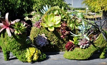 Gardening Workshop for Two or Four at Phoenix Perennials (Up to 54% Off)