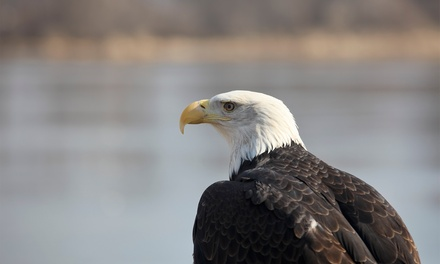 $33 for Bald-Eagle Rafting Trip from Triad River Tours ($66 Value)
