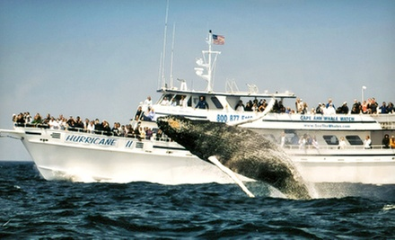 $29 for a Whale-Watching Cruise from Cape Ann Whale Watch (Up to $48 Value)