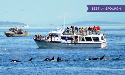 Whale-Watching Boat Tour for One or Two from Orcas Island Eclipse Charters (40% Off)