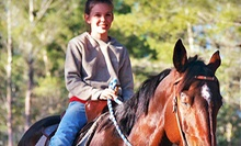 90-Minute Horseback Riding Lesson for One or Two at Haven Horse Ranch (Up to 57% Off)
