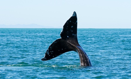 Puget Sound Whale-Watching Tour for One, Two, or Four from All Season Charters (50% Off)