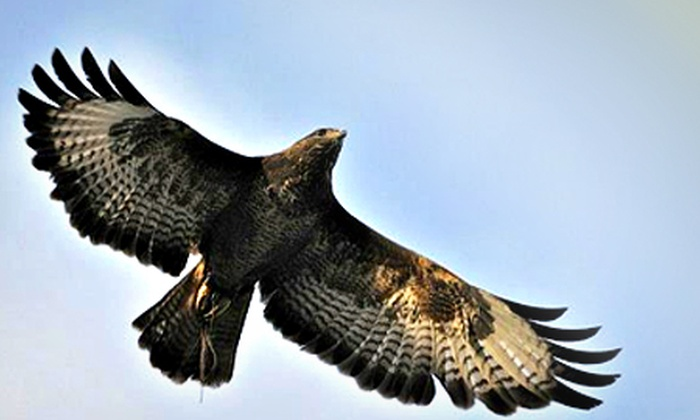 World of Wings - World of Wings: Falconry Experience from £19 at World of Wings (Up to 66% Off)